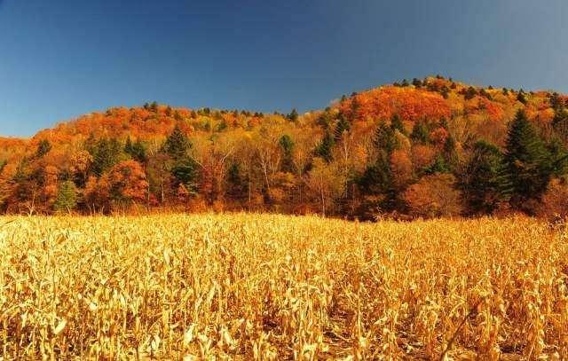 名人写秋天的散文诗10首