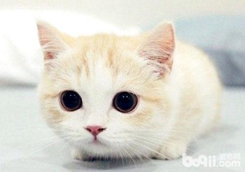 养猫对自己有哪些好处呢?