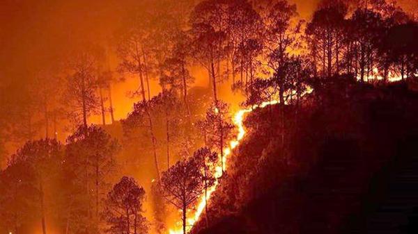 桉树是澳大利亚森林大火的罪魁祸首吗?