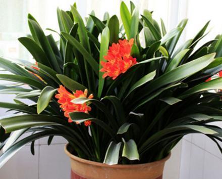 卧室里适合放哪些植物?