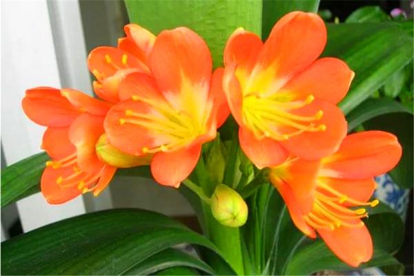"""这4种""""绿植""""不管多贵也要养,摆在客厅能""""旺家"""",家里适合摆放哪几样绿植呢?"""