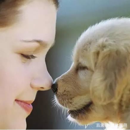 为什么不养其它狗狗,而非要养拉布拉多犬呢?