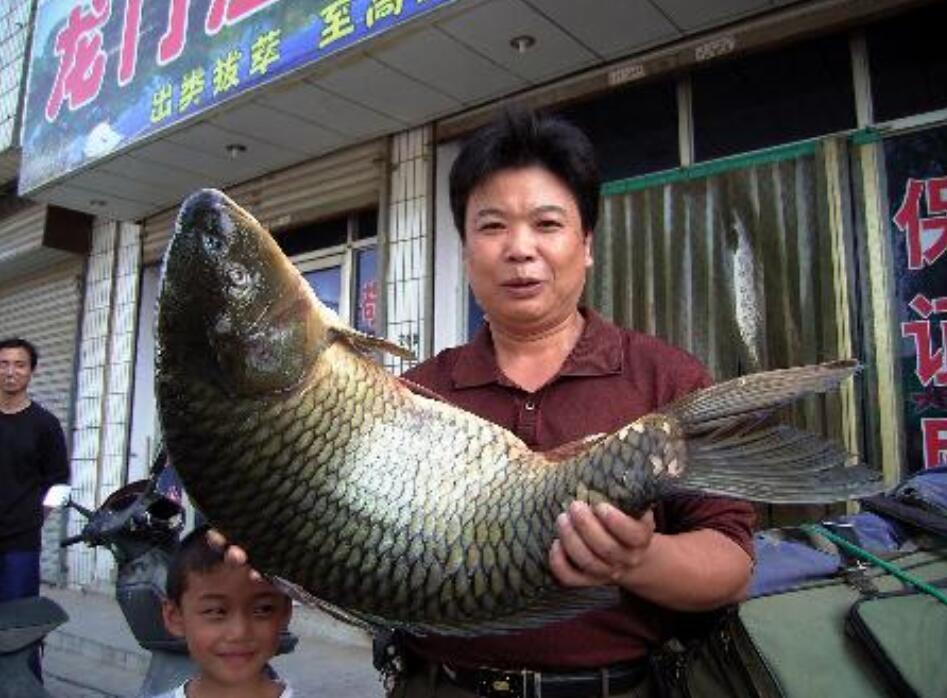 黄河最大的鱼有多大,真有300多斤的大鱼?