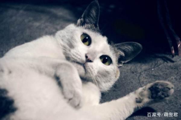 为什么家养的猫咪无时无刻都在偷看主人?