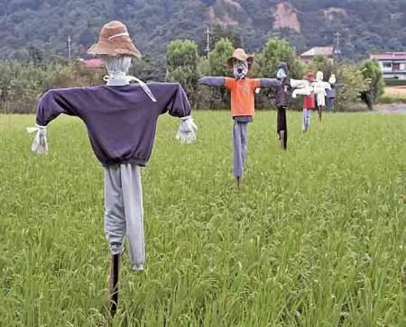 全世界的农民都如何保护庄稼?