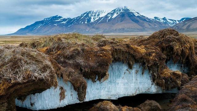 西伯利亚发现4万年前小鸟,仍呈飞行姿态,它为什么能完美保存?