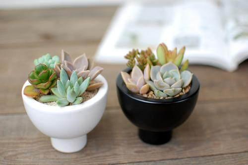 多肉植物更适合瓷盆还是塑料盆?