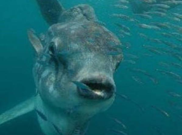 「喀纳斯湖水怪真相揭秘」喀纳斯湖水怪的真相到底是什么?