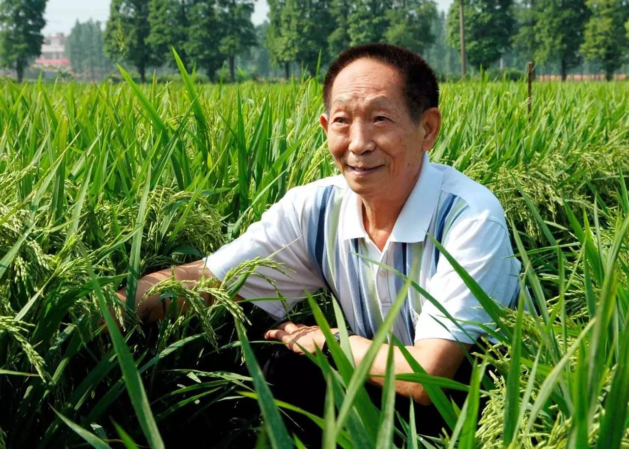 为什么印度耕地面积广大,粮食产量却赶不上70年前的中国?