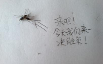 捉蚊趣事作文怎么写