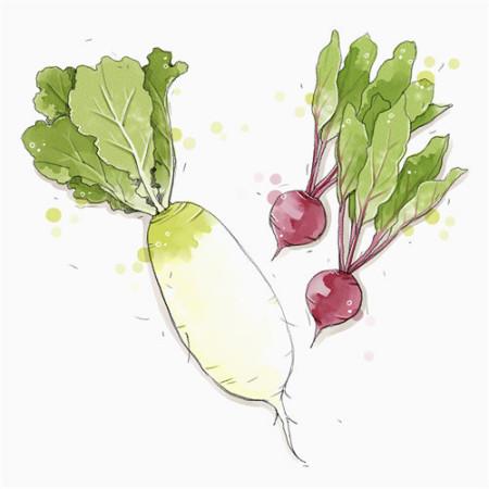 白萝卜减肥食谱有哪些?