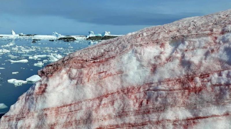 """南極洲現在是夏天,卻突然下起血紅色大雪,它有什么""""冤屈""""?的頭圖"""