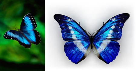 十二星座的守护蝴蝶都是什么?