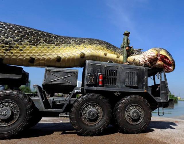 最大的蛇有多大?14.85米长、447公斤重的桂花真存在?