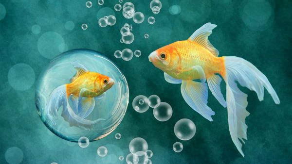 什么及什么鱼成语_成语故事简笔画