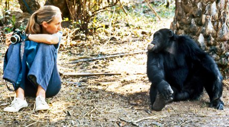 贡贝黑猩猩战争是怎么回事?