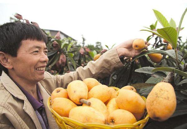 江西的什么水果最有名