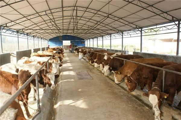 从外国进口的牛肉为什么会比中国的牛肉还便宜?