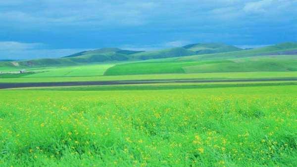 热爱草原诗词,描写大草原的诗词