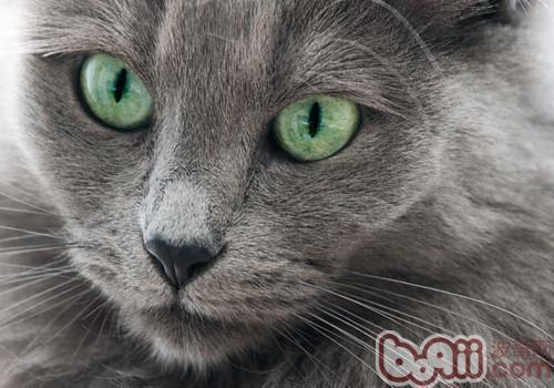 猫咪真的会信任你吗?