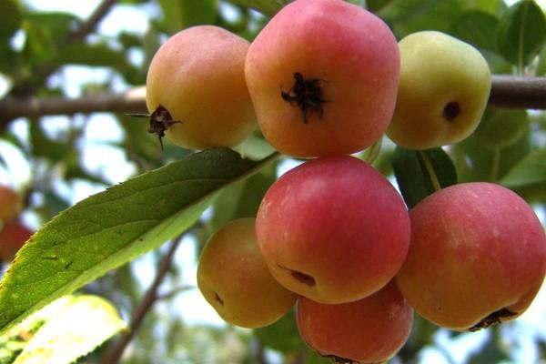 农村自家种的果树,与草共生的果园要怎么科学管理?