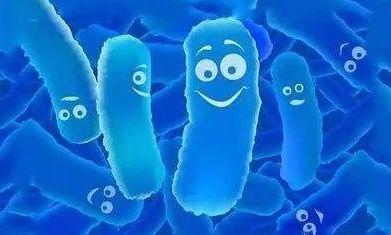 益生菌怎么吃最合适?