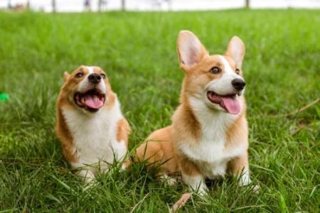 十二星座的幸运宠物是什么?