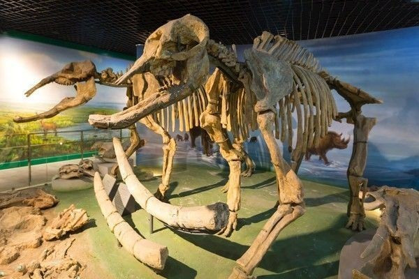 「人类始祖是恐龙吗」人类始祖是恐龙吗?