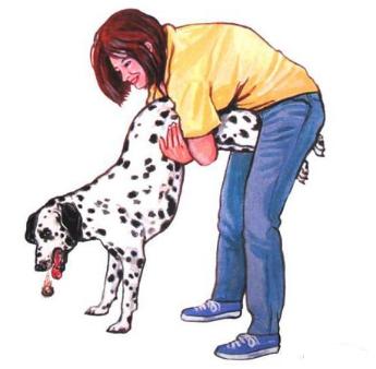 小狗骨头疑似卡在喉咙有什么办法