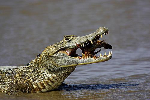 在亚马逊河中站三分钟究竟会受到哪些伤害呢?