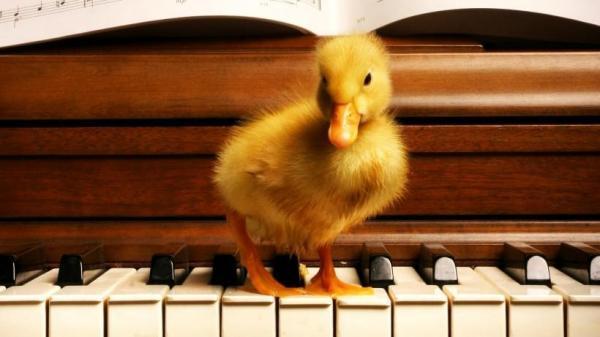 每月3000,钢琴老师却换了一个又一个,究竟怎样选择钢琴老师?