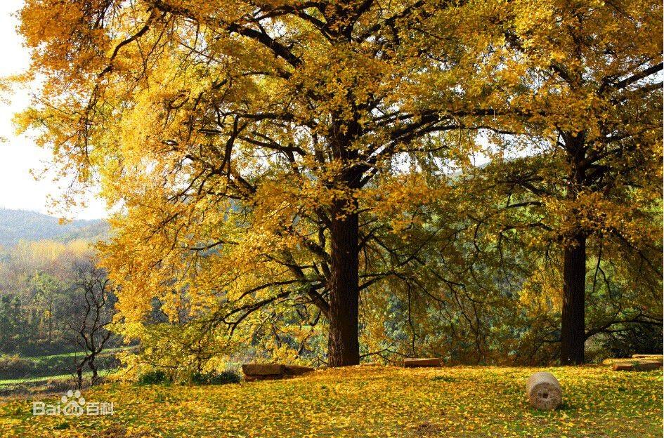 描写秋天的景色诗句有哪些(描写秋天景色的诗句(小学生必背的))