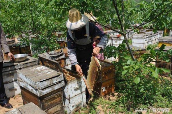 结晶蜂蜜一定是好蜂蜜吗?