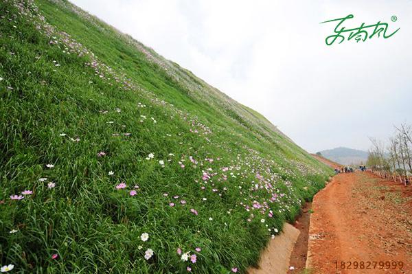 边坡绿化客土喷播后应如何养护?