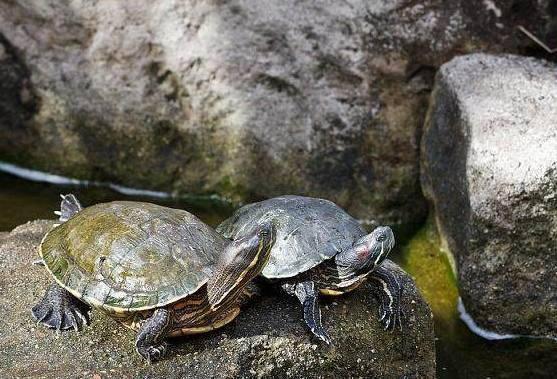 养乌龟都有哪些经历?