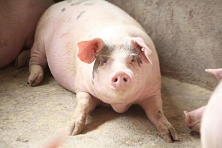 猪价上涨是吃猪肉的多了还是养猪的少了?